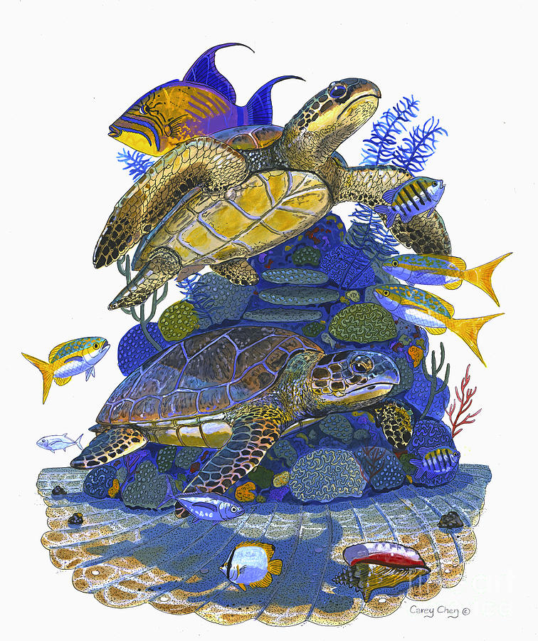 Turtle Painting - Cayman Turtles by Carey Chen