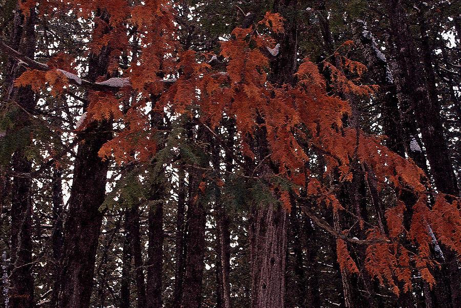 Cedar Photograph - Cedar by Joanne Smoley