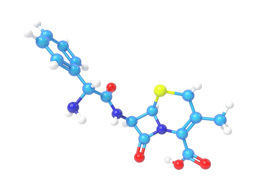 Antibacterial Photograph - Cefalexin Molecule by Indigo Molecular Images