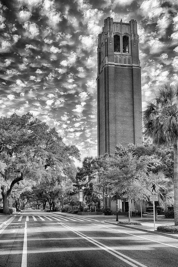 University Of Florida Photograph - Century Tower  by Howard Salmon