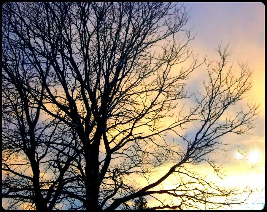 Tree Photograph - Change of Perspective by Misty Herrick