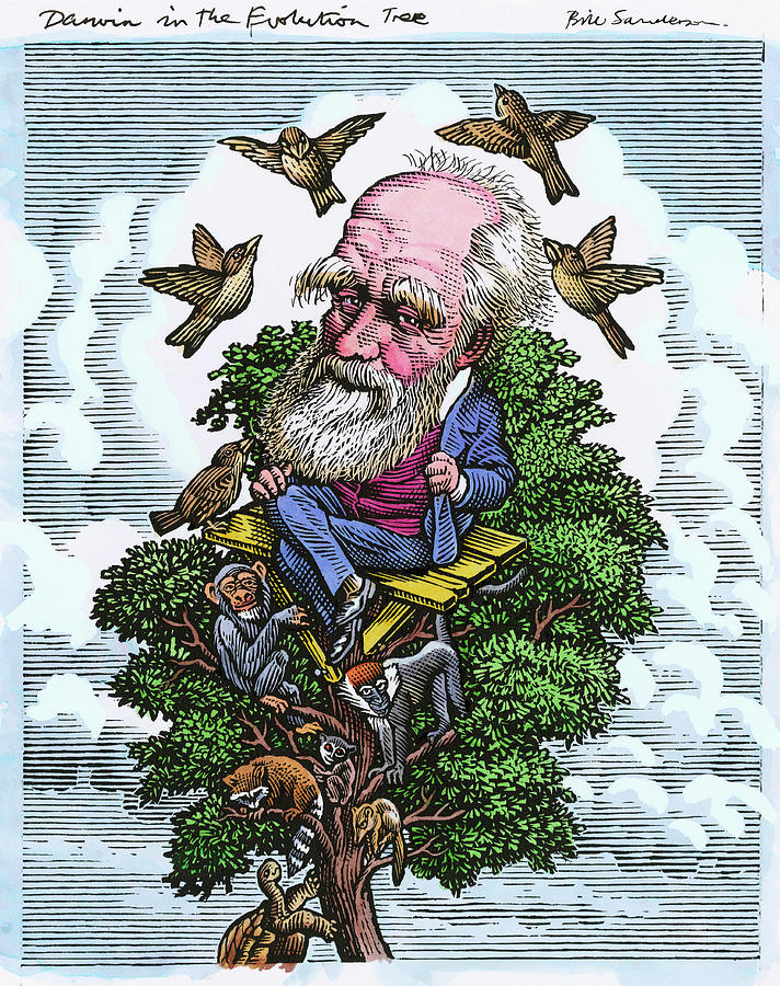 Charles Darwin Photograph - Charles Darwin In His Evolutionary Tree by Bill Sanderson