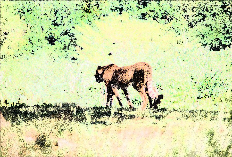 Cheetah Digital Art - Cheetah by Steve Karol