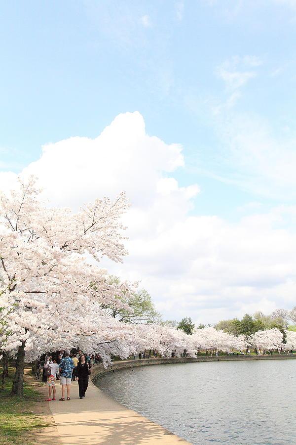 America Photograph - Cherry Blossoms - Washington Dc - 01131 by DC Photographer