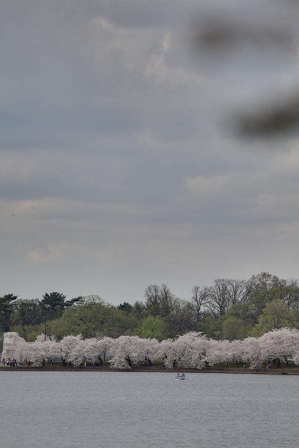America Photograph - Cherry Blossoms - Washington Dc - 011323 by DC Photographer