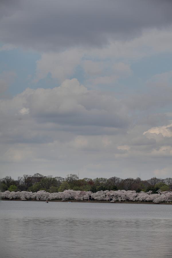 America Photograph - Cherry Blossoms - Washington Dc - 011334 by DC Photographer