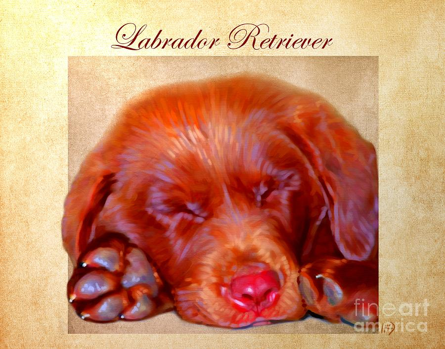 Dog Painting - Chocolate Labrador Puppy by Iain McDonald