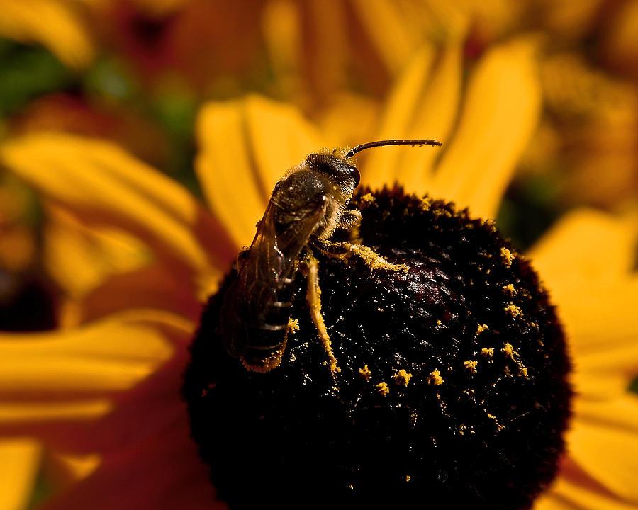 Honey Bee Photograph - Circling by Rona Black