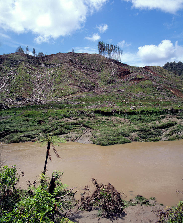 Deforestation Photograph - Cleared Forest Beside A Sediment-laden River by Simon Fraser/science Photo Library