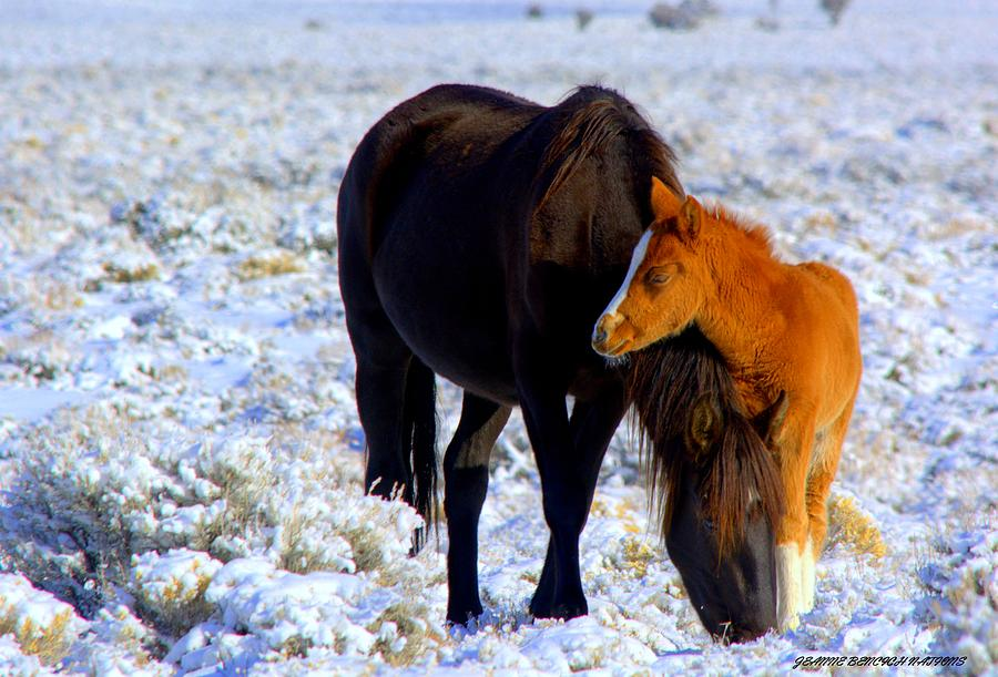 Wild Horses Photograph - Close To You  by Jeanne  Bencich-Nations