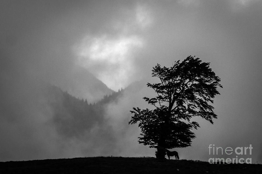 Cloud Kingdom Photograph by Vlad Dobrescu