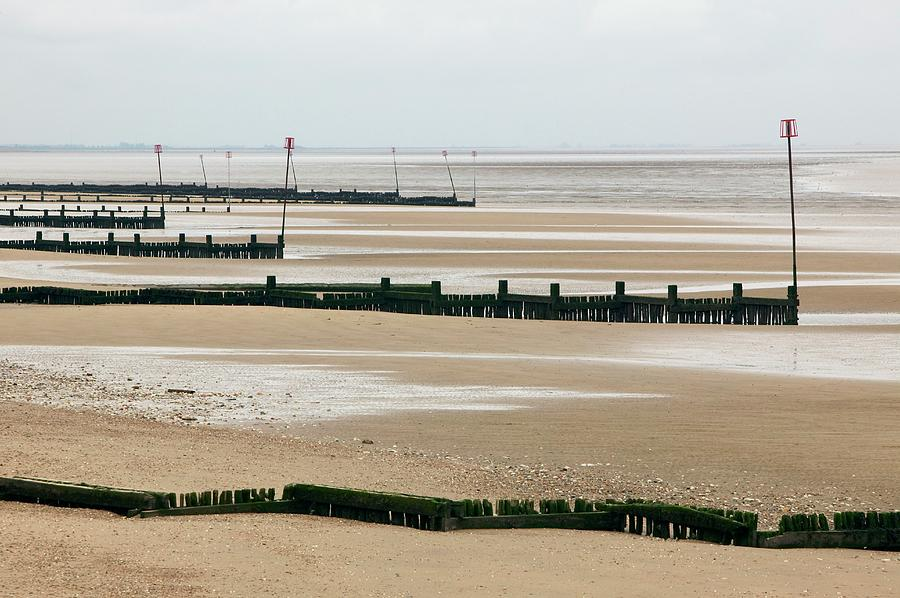 Beach Photograph - Coastal Defences by Colin Cuthbert/science Photo Library