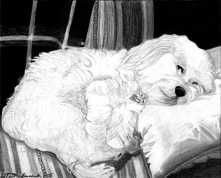 Cockapoo Dog Portrait   Drawing by Olde Time  Mercantile