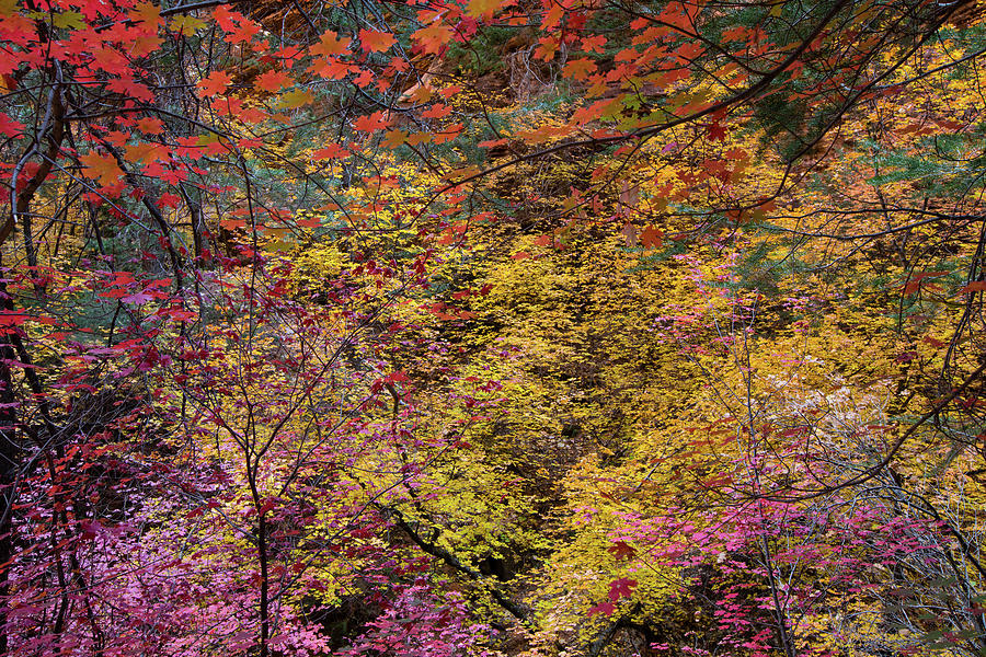 Horizontal Photograph - Colorful Leaves On A Tree by Panoramic Images