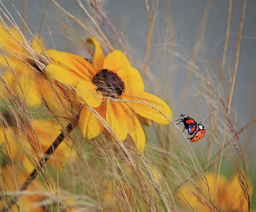 Macro Photograph - Colors Of Summer by Anna Cseresnjes