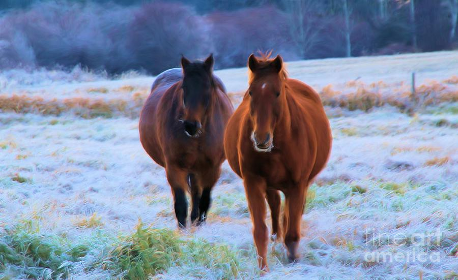 Horses Photograph - Coming Home by Roland Stanke
