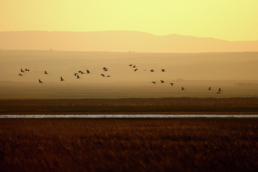 Wildlife Photograph - Common Cranes At Gallocanta Lagoon by David Santiago Garcia