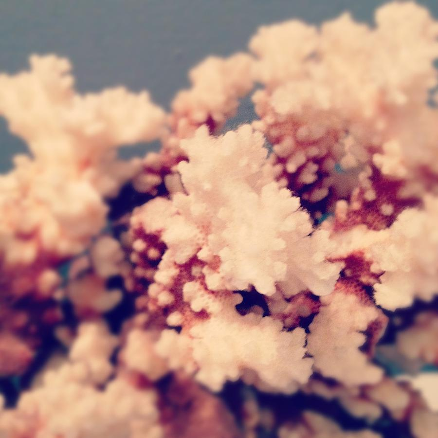 Coral Photograph - Coral by Christy Beckwith