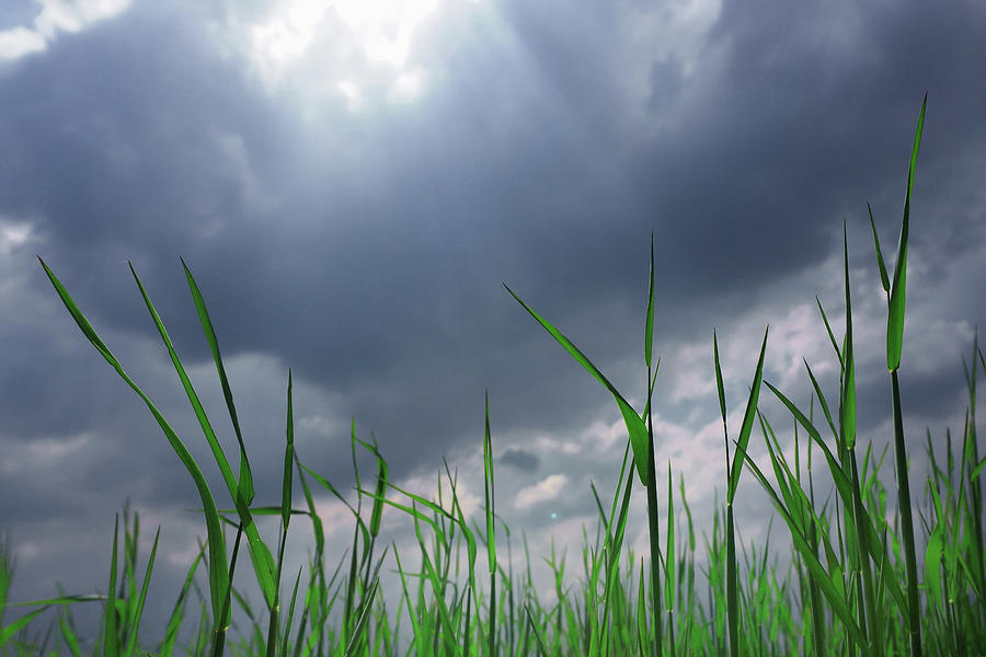 Corn Plant With Thunderstorm Clouds Photograph by Silvia Otte