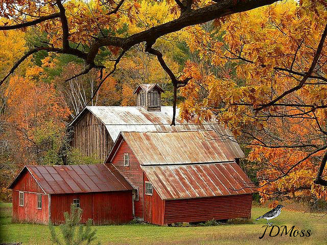 Nature Photograph - Country Living by Janet Moss