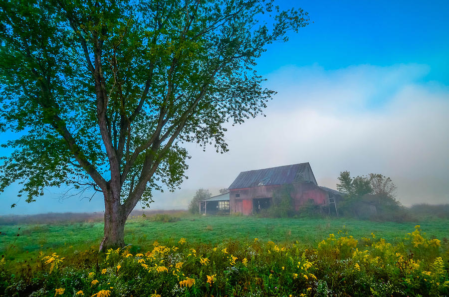 Country Morning Photograph by Brian Stevens