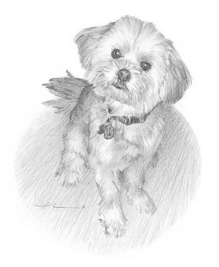Curious Little Dog Pencil Portrait Drawing by Mike Theuer