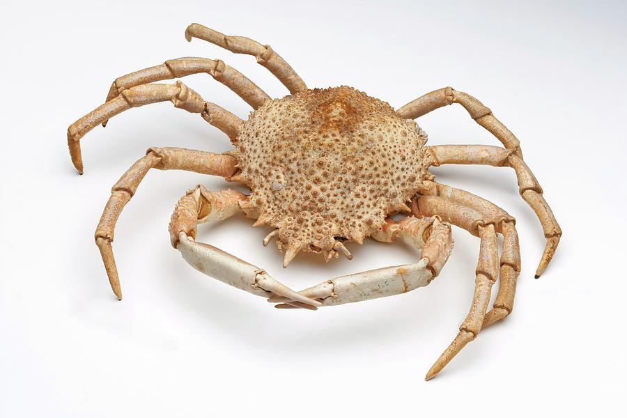 Crab Exoskeleton Specimen Photograph by Ucl, Grant Museum Of Zoology