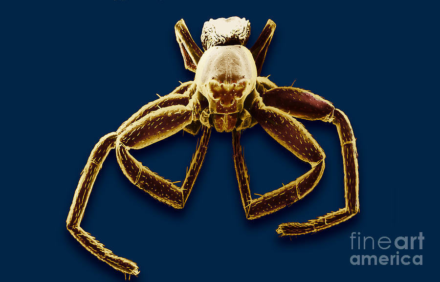 Crab Spider Photograph - Crab Spider by David M. Phillips