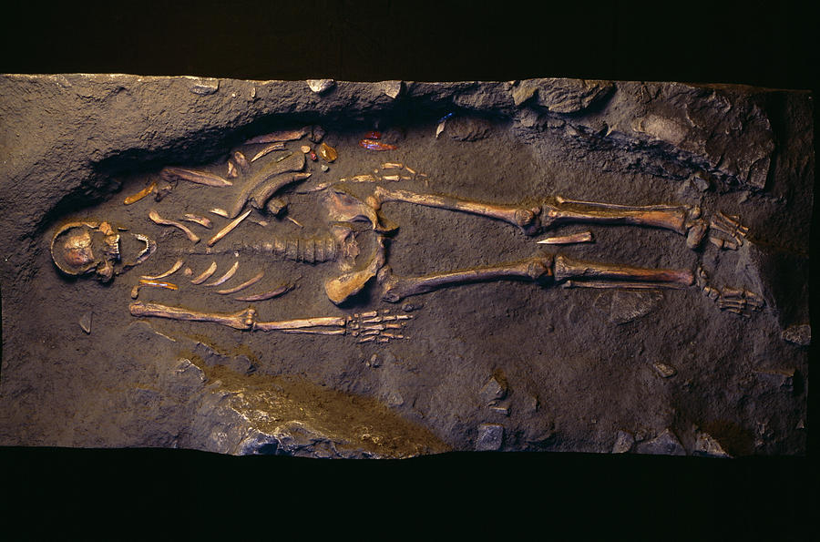 Cro-magnon Photograph - Cro-magnon Man Fossil by Pascal Goetgheluck/science Photo Library