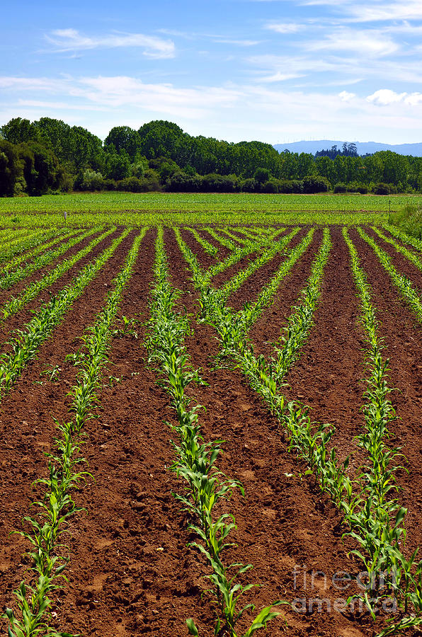 Agricultural Photograph - Cultivated Land by Carlos Caetano