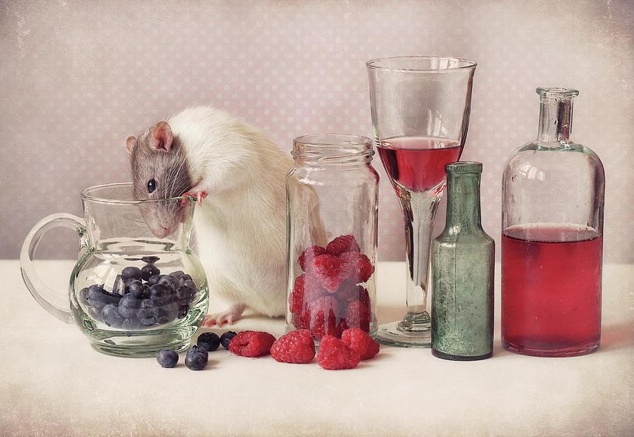 Fruit Photograph - Curious by Ellen Van Deelen