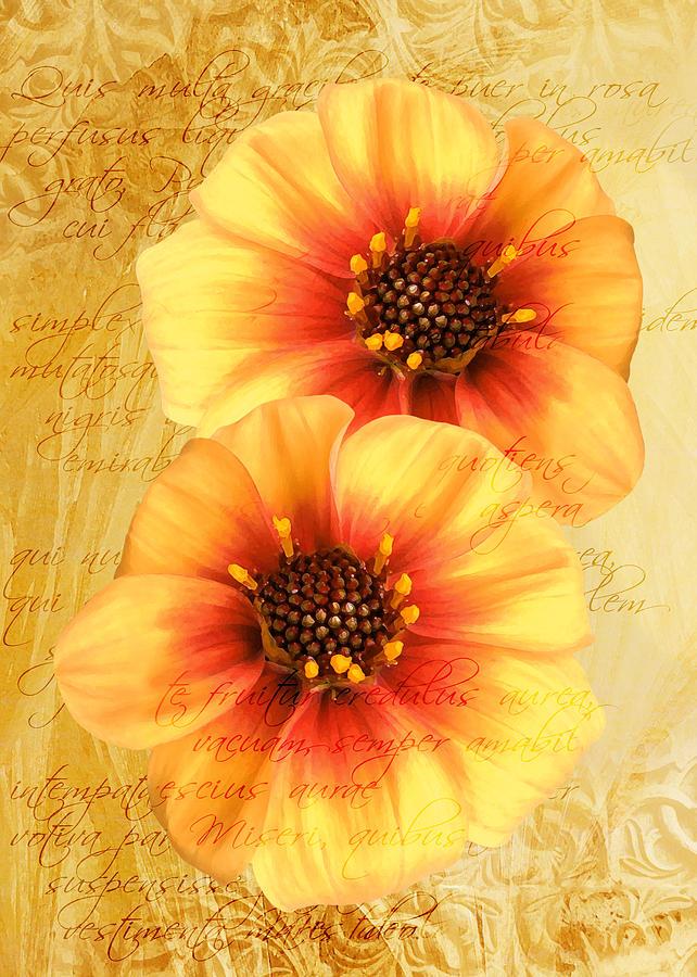 Dahlias by Helene U Taylor