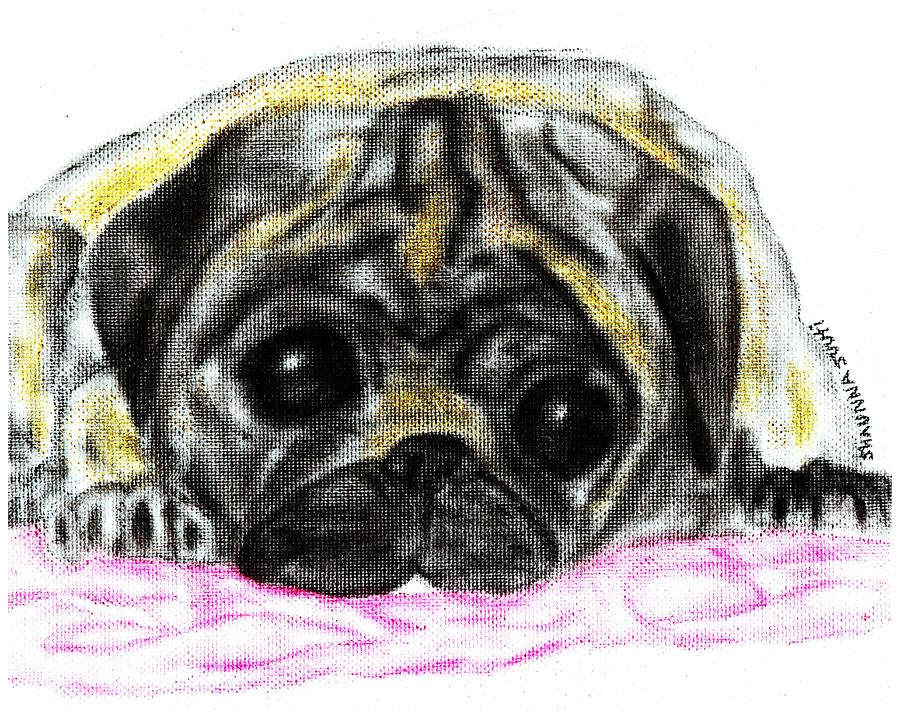 Pug Pastel - Daisys Red Blanket by Shaunna Juuti