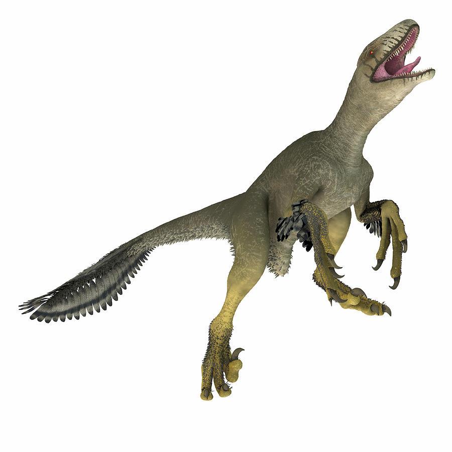 Dinosaur Photograph - Dakotaraptor Dinosaur On White 1 by Corey Ford