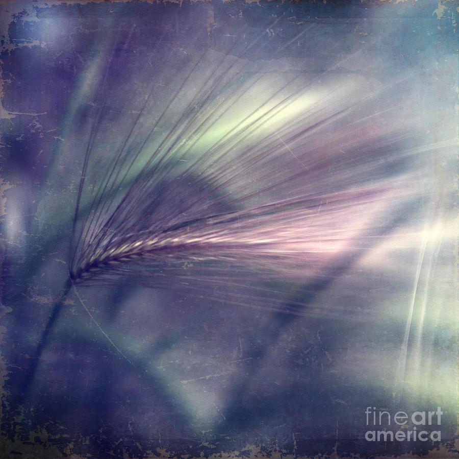 Foxtail Barley Photograph - darkly series II by Priska Wettstein
