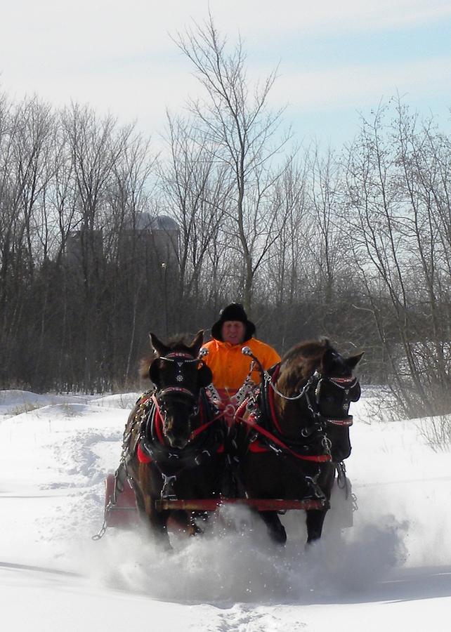 Canada Photograph - Dashing through the Snow by Peggy  McDonald