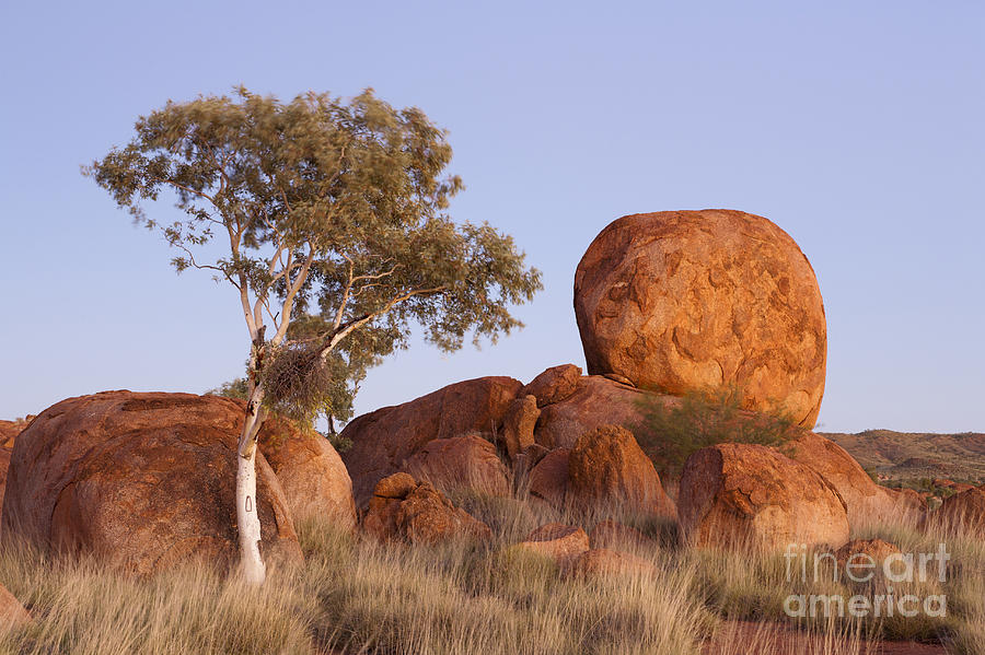 Dawn Devils Marbles Northern Territory Photograph