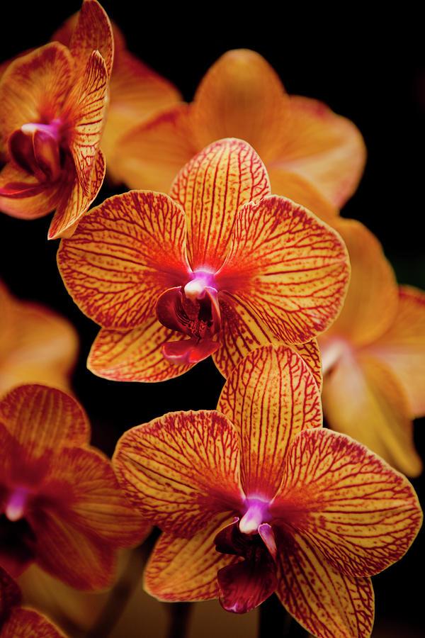 Deep Cut Orchid Society 15th Annual Photograph by Dan Pfeffer