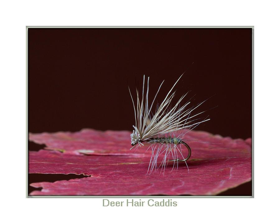 Deer Hair Caddis Photograph - Deer Hair Caddis by Neal Blizzard