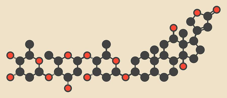 Digoxin Photograph - Digoxin Heart Failure Drug Molecule by Molekuul