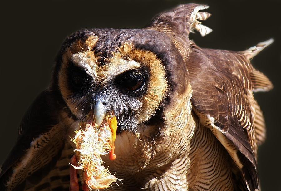 Bird Photograph - Dinner by Paulette Thomas