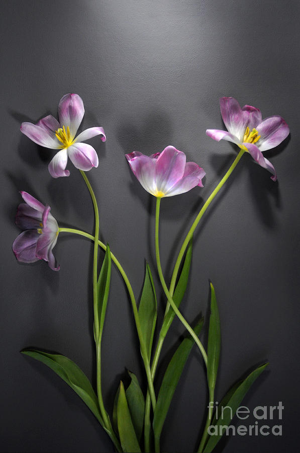 Flower Photograph - Directions by Dan Holm