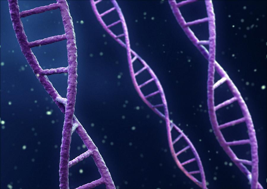 Artwork Photograph - Dna Strands by Maurizio De Angelis/science Photo Library