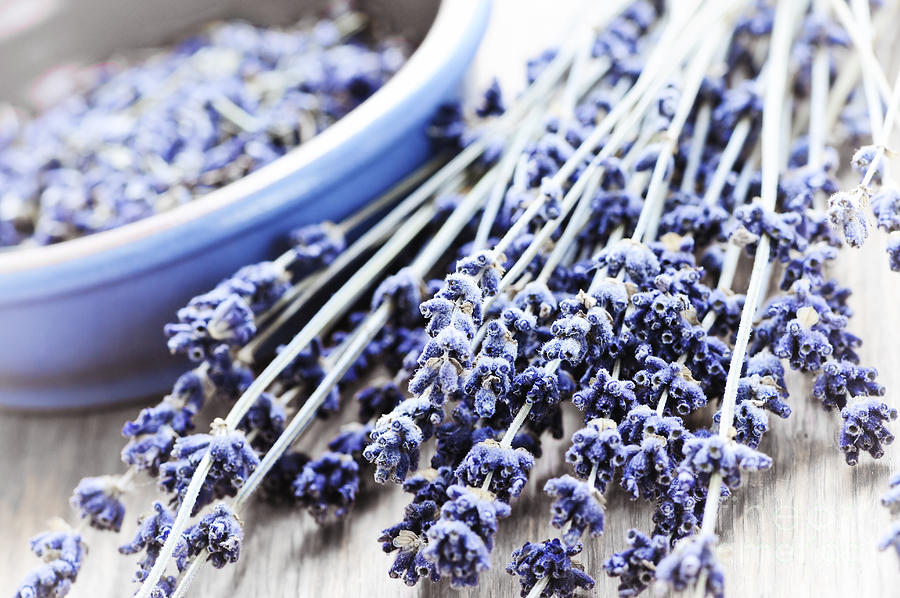 Lavender Photograph - Dried Lavender by Elena Elisseeva