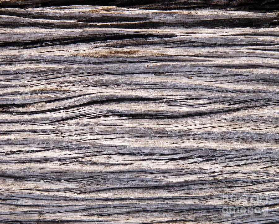 Drift Wood Photograph