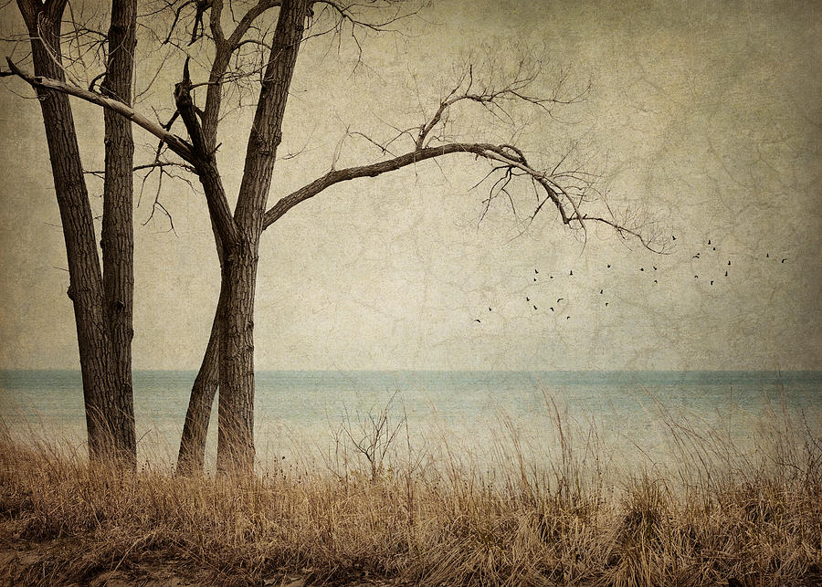 Landscape Photograph - Drifting by Amy Weiss