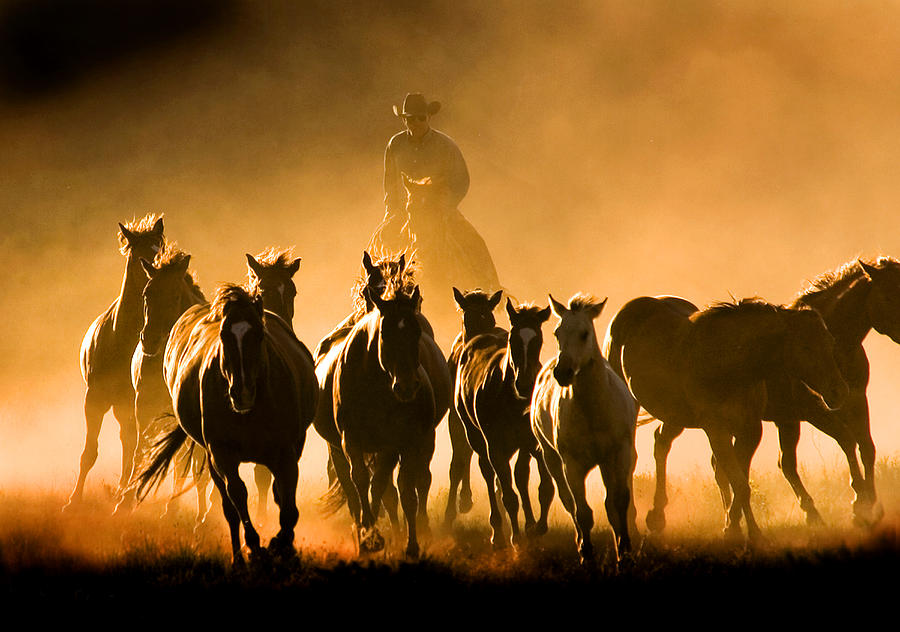 Driving the Herd Photograph by Lourie Zipf