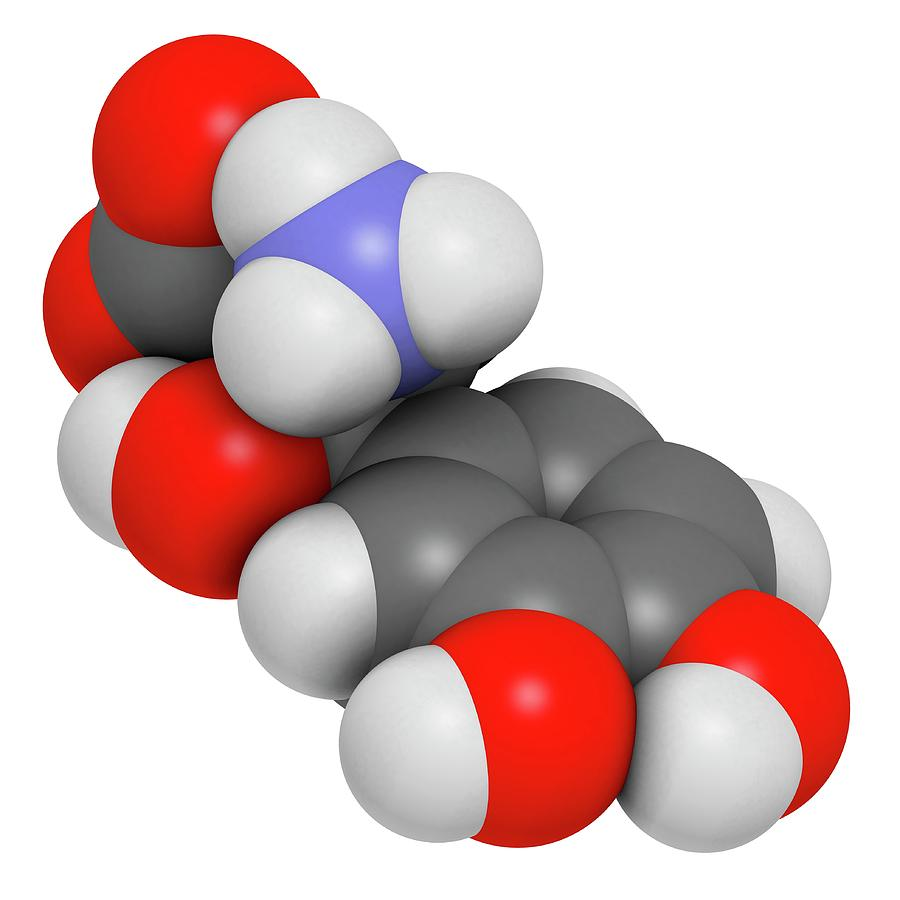 Dops Photograph - Droxidopa Hypotension Drug Molecule by Molekuul