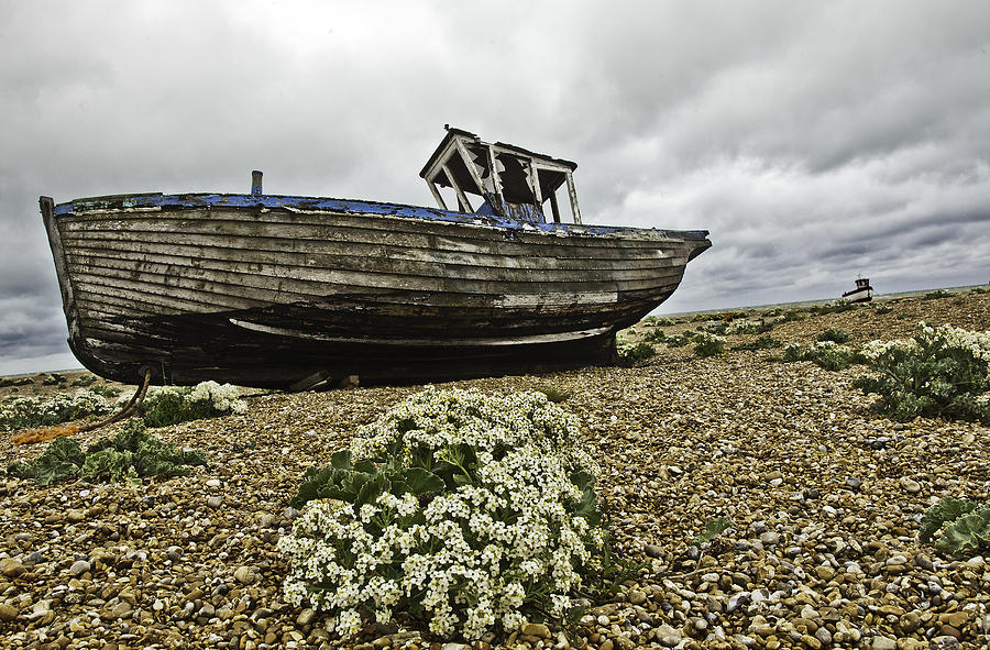 Dungeness Pyrography - Dungeness by Lesley Rigg