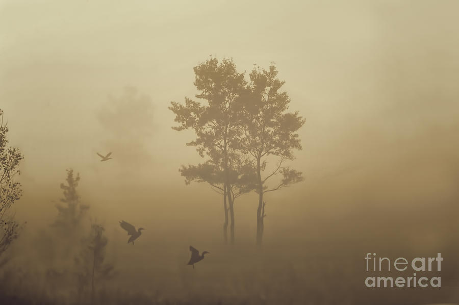 Ducks Photograph - Early Morning Canaan Valley by Dan Friend